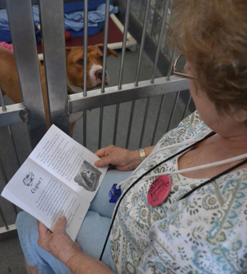 Mrs Barbabell reading to lonely lovely doggies